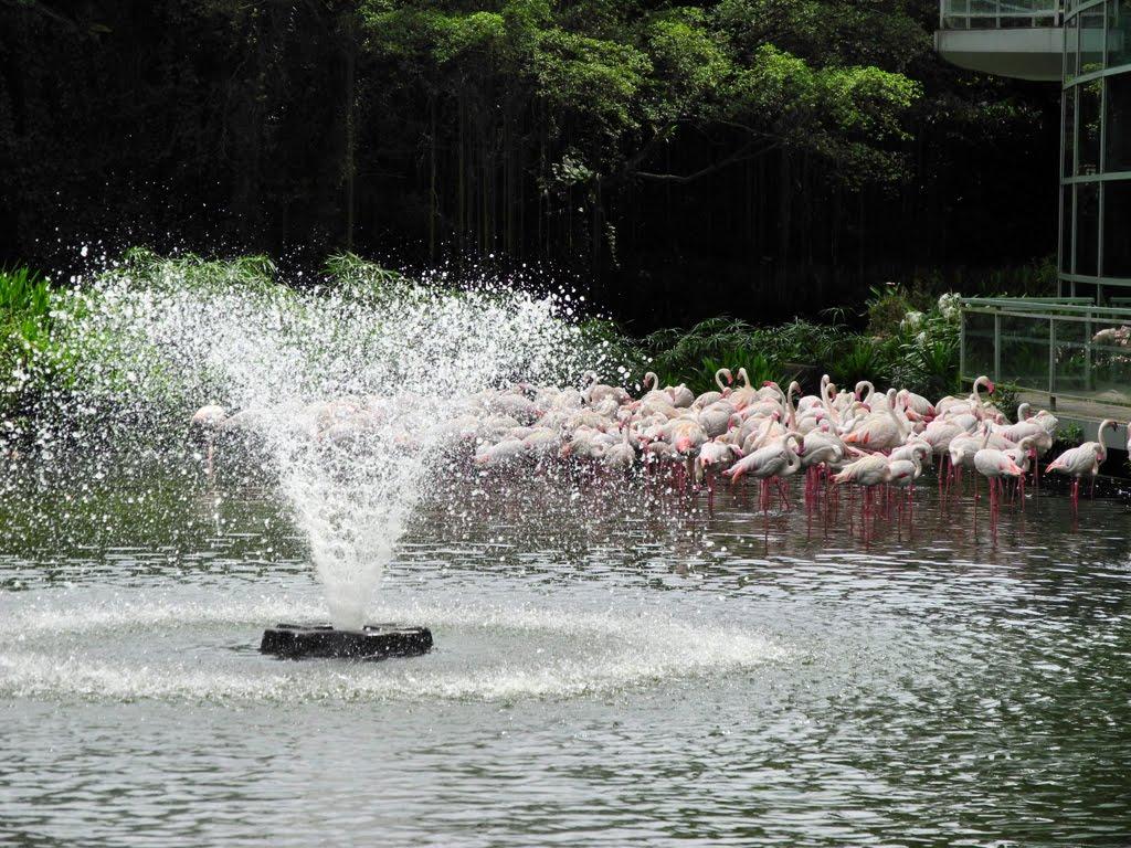 """Flamingo Lake với những chú hồng hạc đang """"thả dáng"""""""