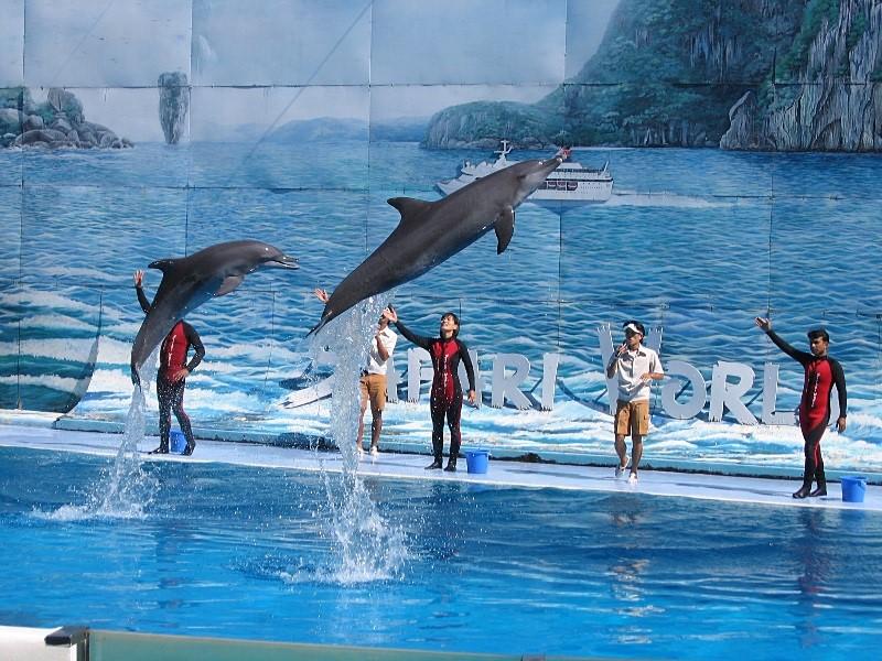 Biểu diễn cá heo tại Vinpearl Safari sẽ khiến các bạn nhỏ thích thú