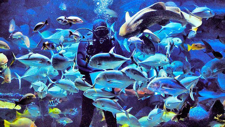 Chiang Mai Zoo Aquarium đang bảo tồn hơn 2000 loài sinh vật biển quý hiếm