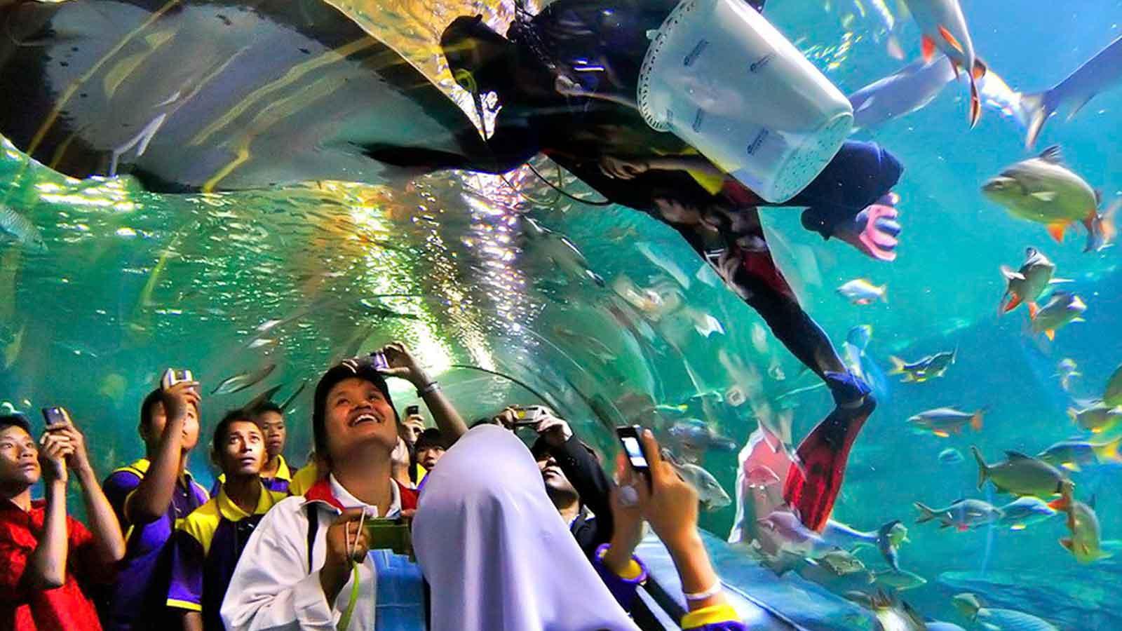 Du khách luôn hào hứng khi ngắm nhìn cuộc sống ở đại dương thu nhỏ