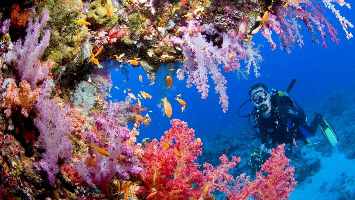 Nhìn cảnh này bạn đã muốn lặn biển Nha Trang ngay và luôn chưa?