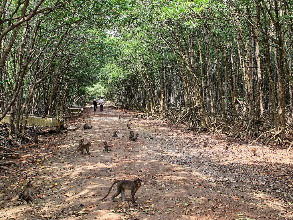 Hãy cẩn thận với những chú khỉ tinh nghịch này nhé