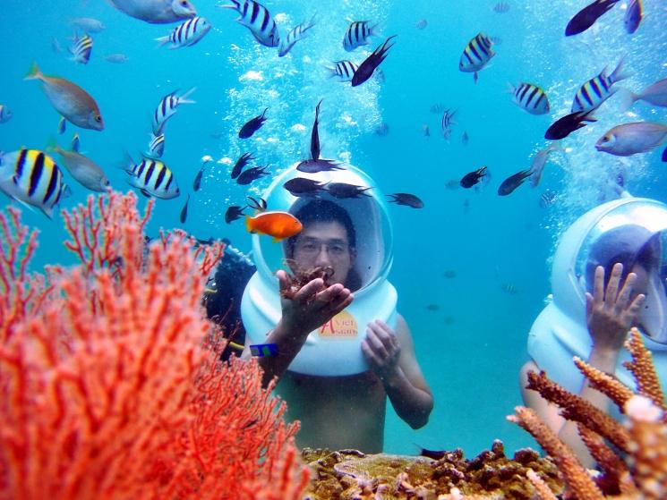 Dạo chơi dưới đáy biển với san hô, cá nhỏ, rùa biển…