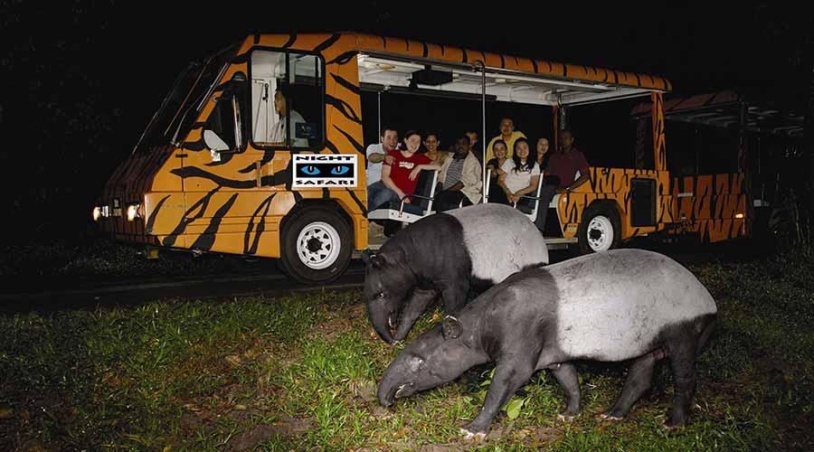 Khu vực Night Safari chỉ mở cửa từ 19h30 tối