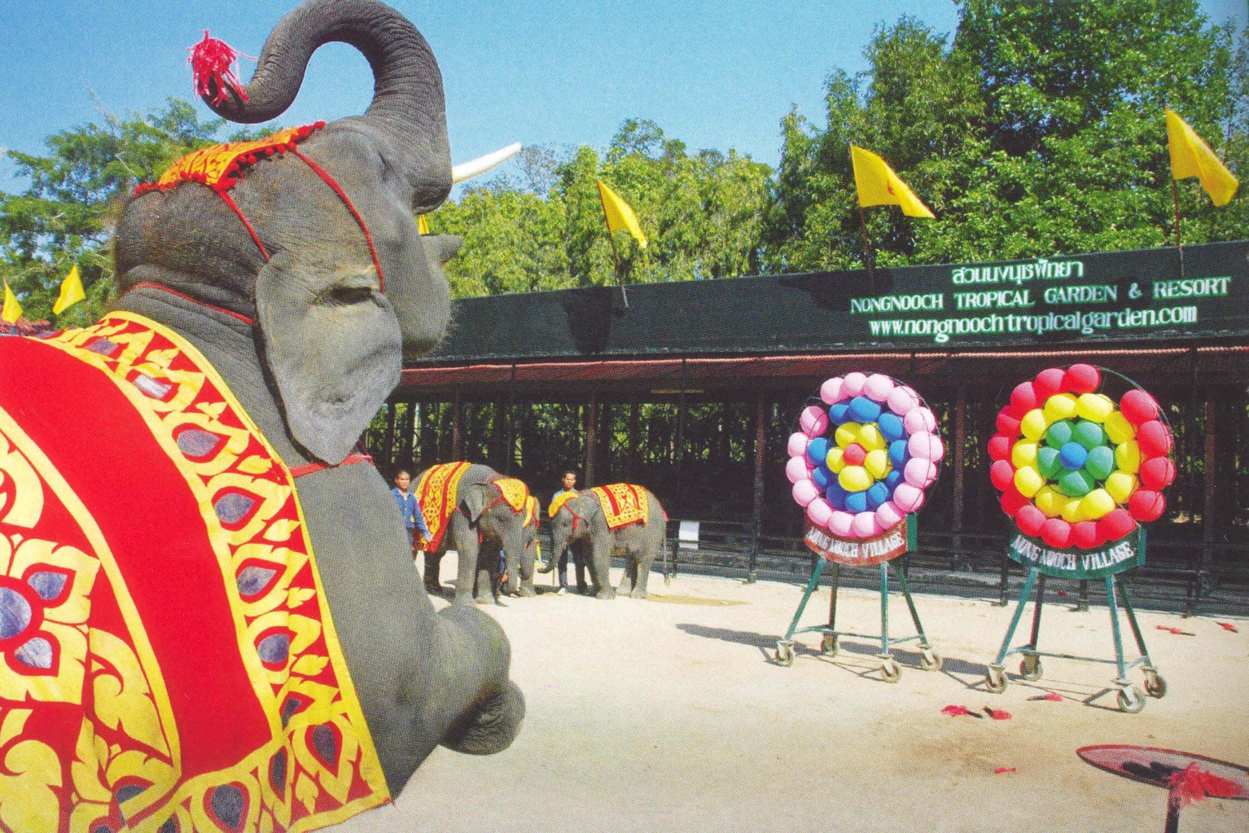 Màn trình diễn của những chú voi đáng yêu sẽ khiến nhiều người thích thú