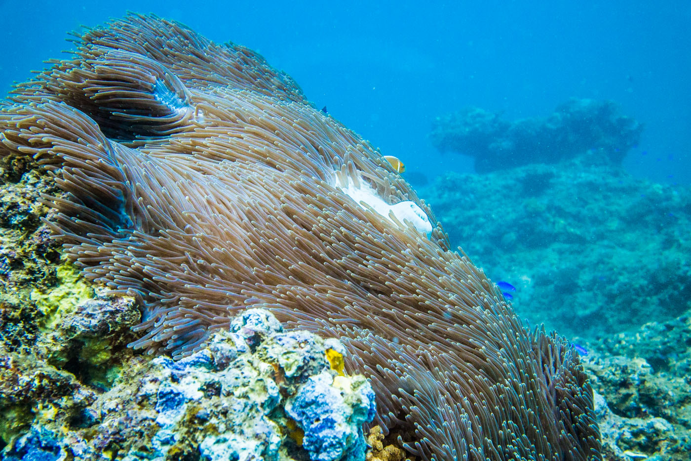 Vẻ đẹp của thảm san hô Hòn Mun