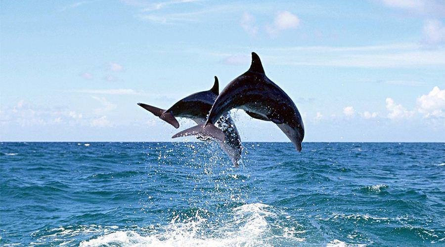 Màn trình diễn đầy thích thú của những người bạn cá voi