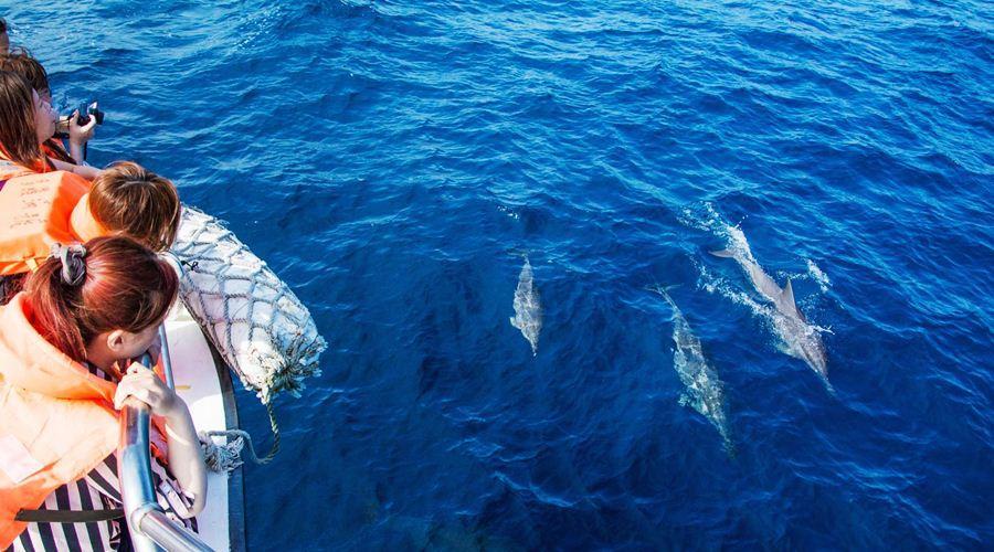 Du khách may mắn gặp được những chú cá voi tinh nghịch