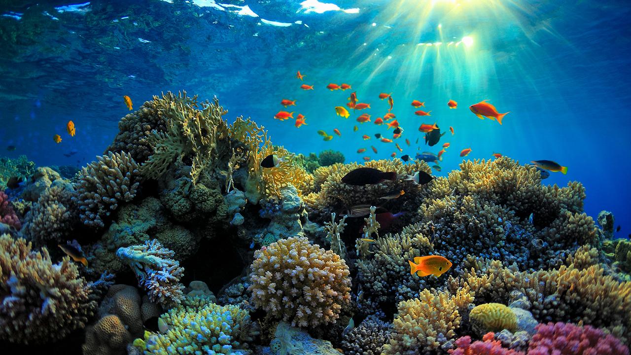 """Những rạn san hô này còn là """"nhà"""" của rất nhiều sinh vật nhỏ khác"""