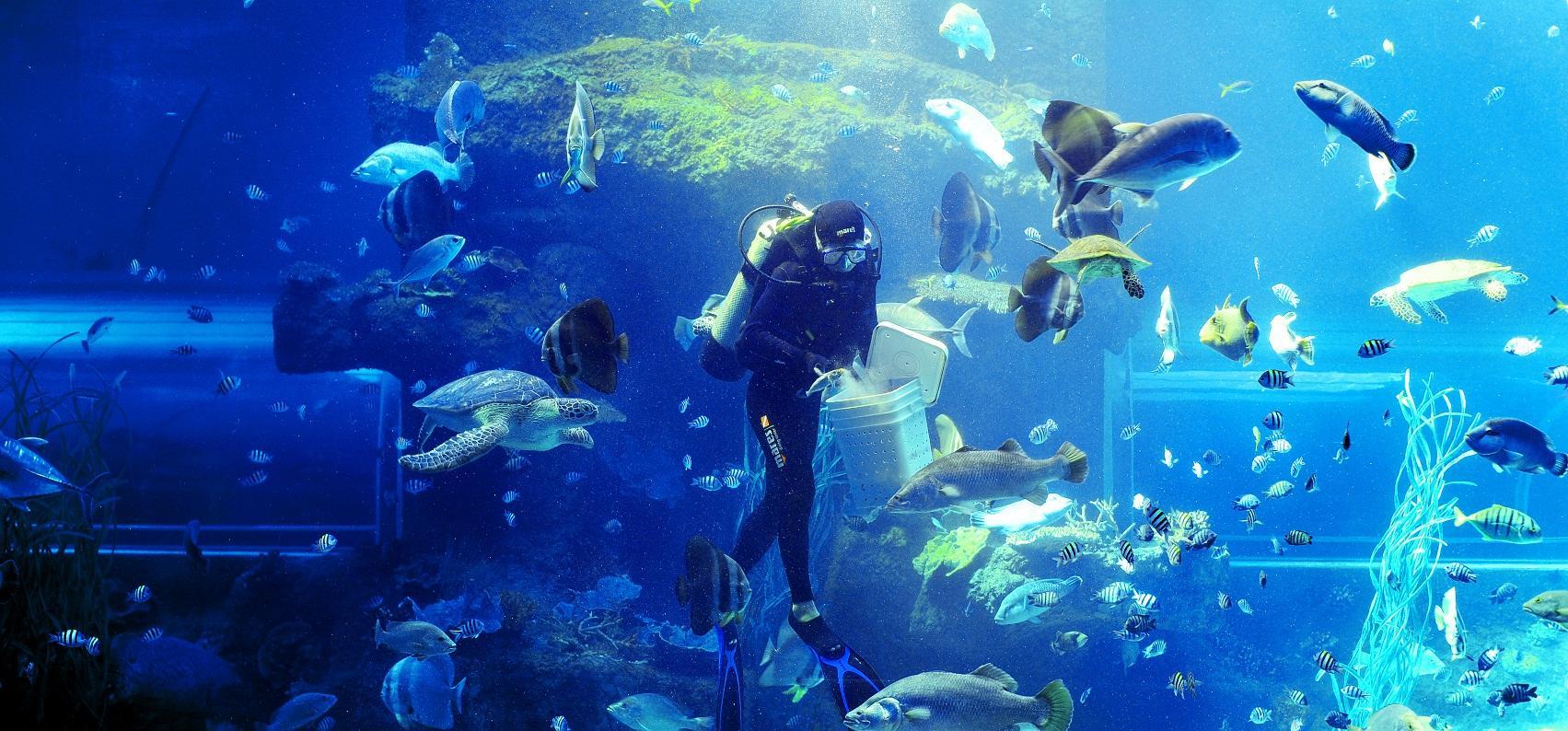 Chương trình biểu diễn cho cá ăn tại khu vực Thủy cung