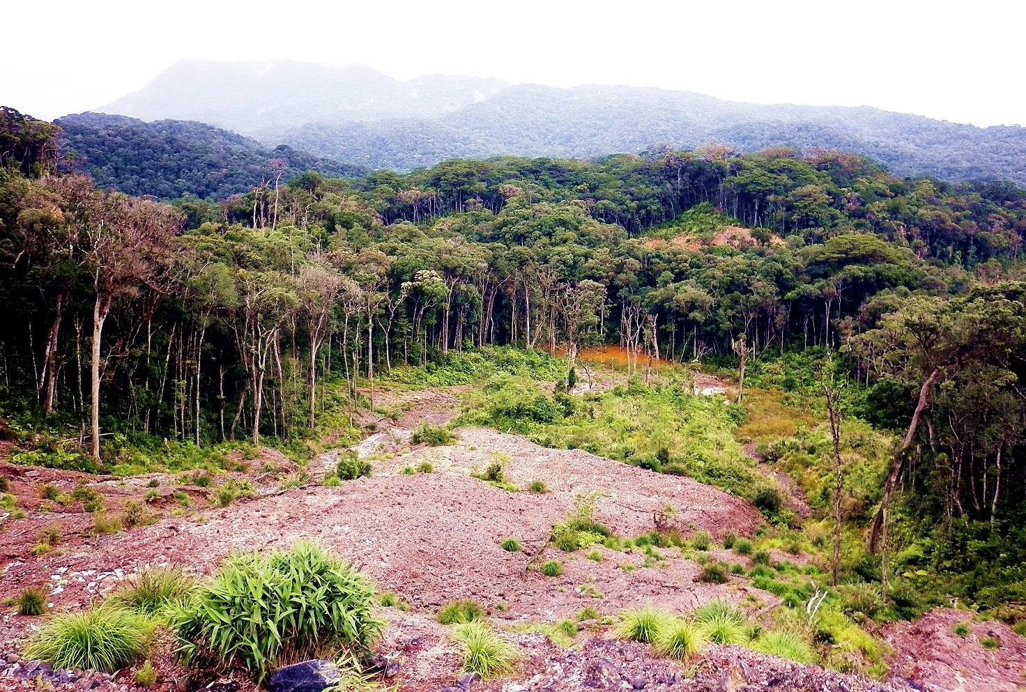 Thảm thực vậy xanh tươi hùng vĩ tại Công viên quốc gia núi Bidoup