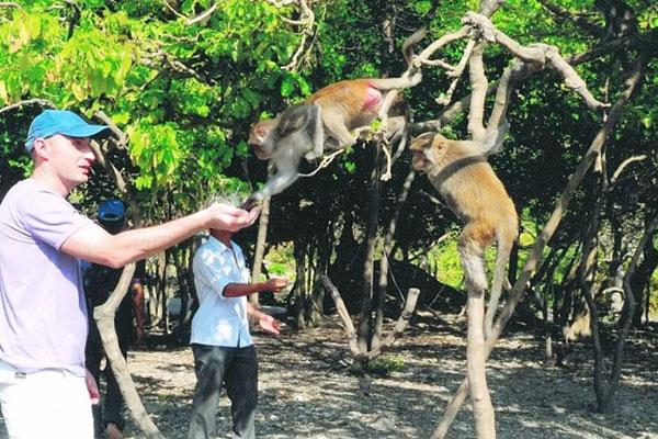Có khoảng hơn 20 chú khỉ đang sinh sống tại đảo Cát Dứa