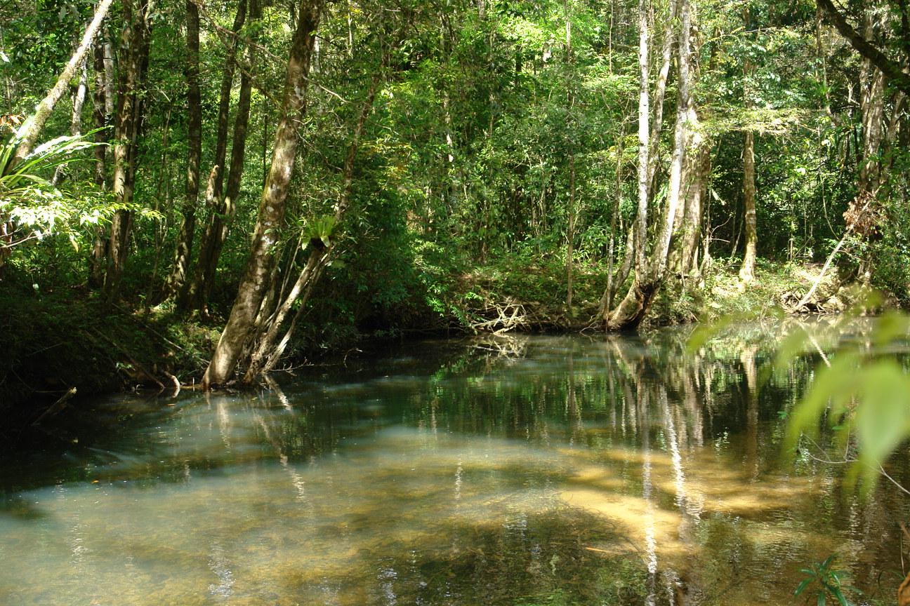 Công viên quốc gia núi Bidoup là bản hợp cả của cây, lá gió và nước
