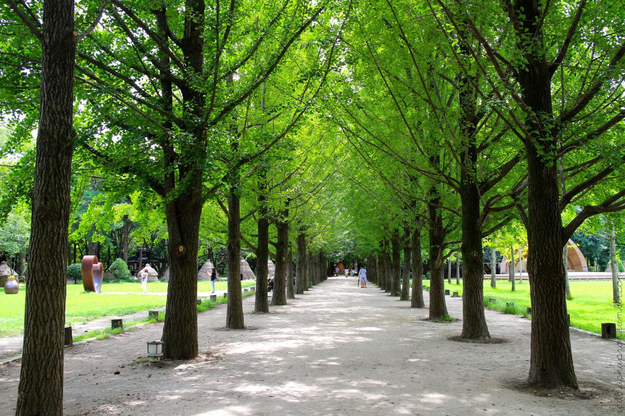 Vào mùa xuân, những hàng cây khoác lên mình chiếc áo xanh tươi mơn mởn