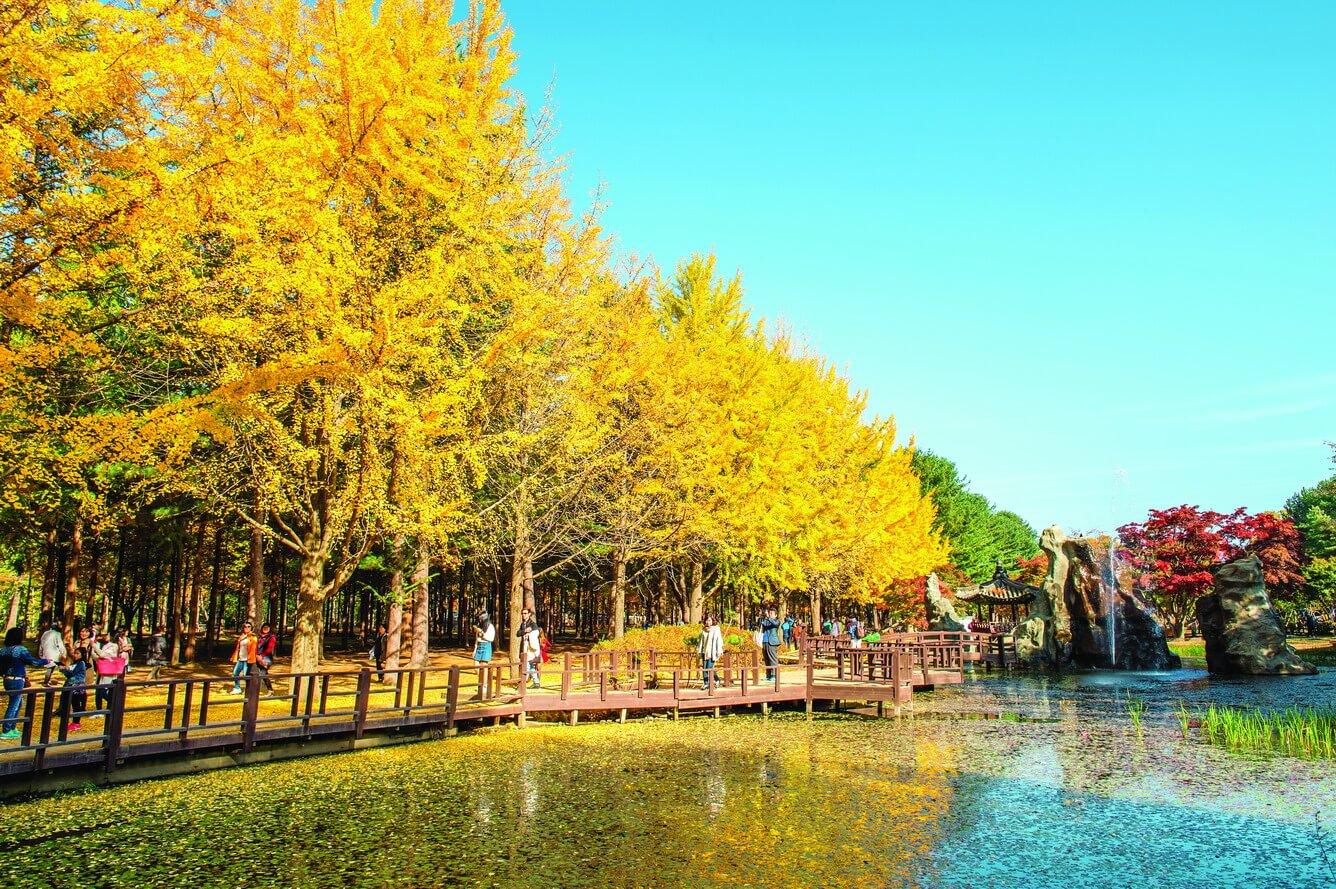 Đảo Nami được cho là địa điểm du lịch lãng mạn bậc nhất Hàn Quốc hiện nay