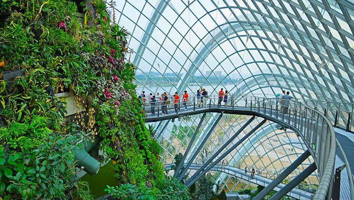 Bạn có thể ngắm nhìn toàn cảnh hệ thống sinh thái từ OCBC Skywalk