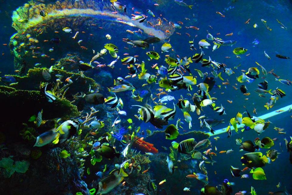 Hàng ngàn sinh vật biển sinh sống tại S.E.A Aquarium