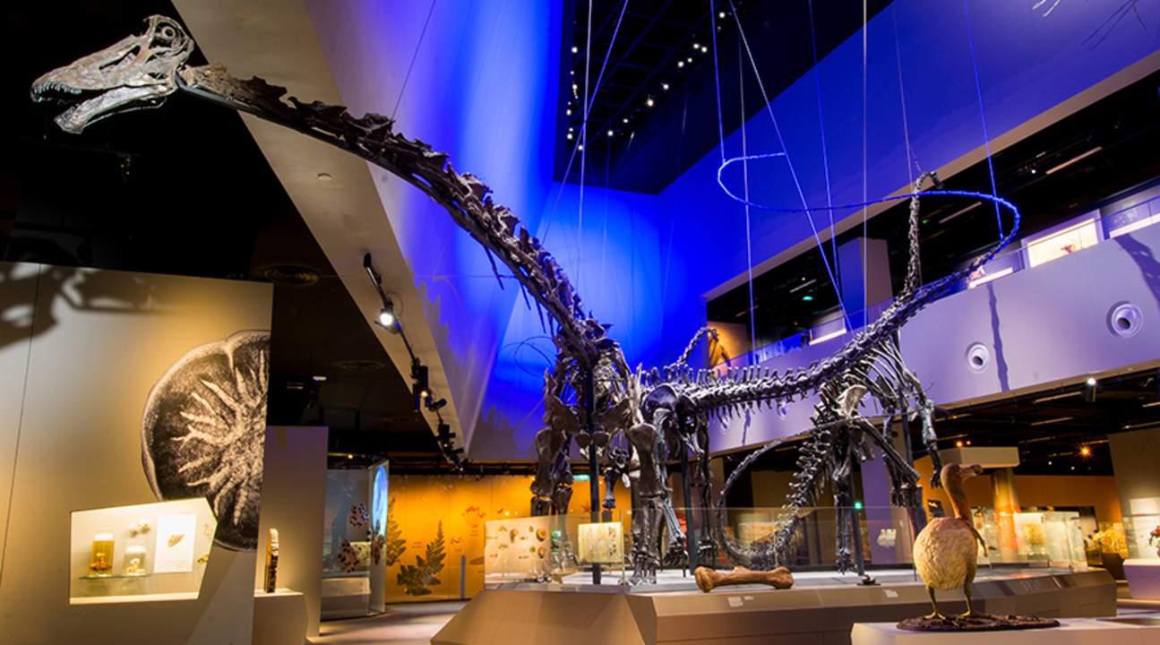 Một trong những hóa thạch khủng long lớn nhất thế giới còn nguyên vẹn