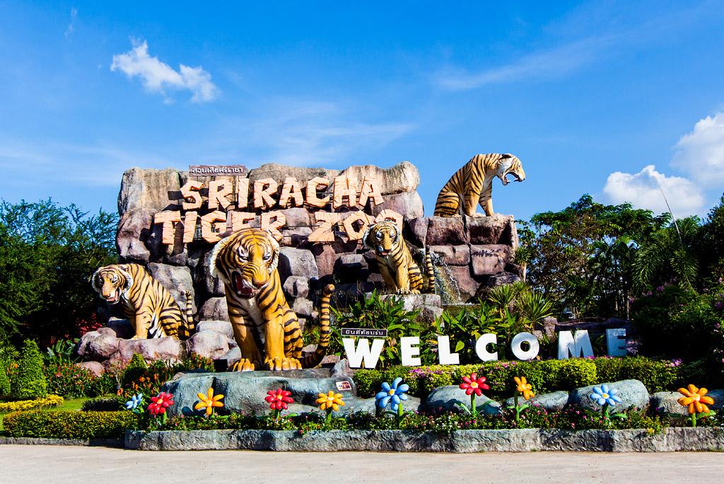 Trại hổ Sriracha Tiger Zoo - nơi ở những chúa sơn lâm