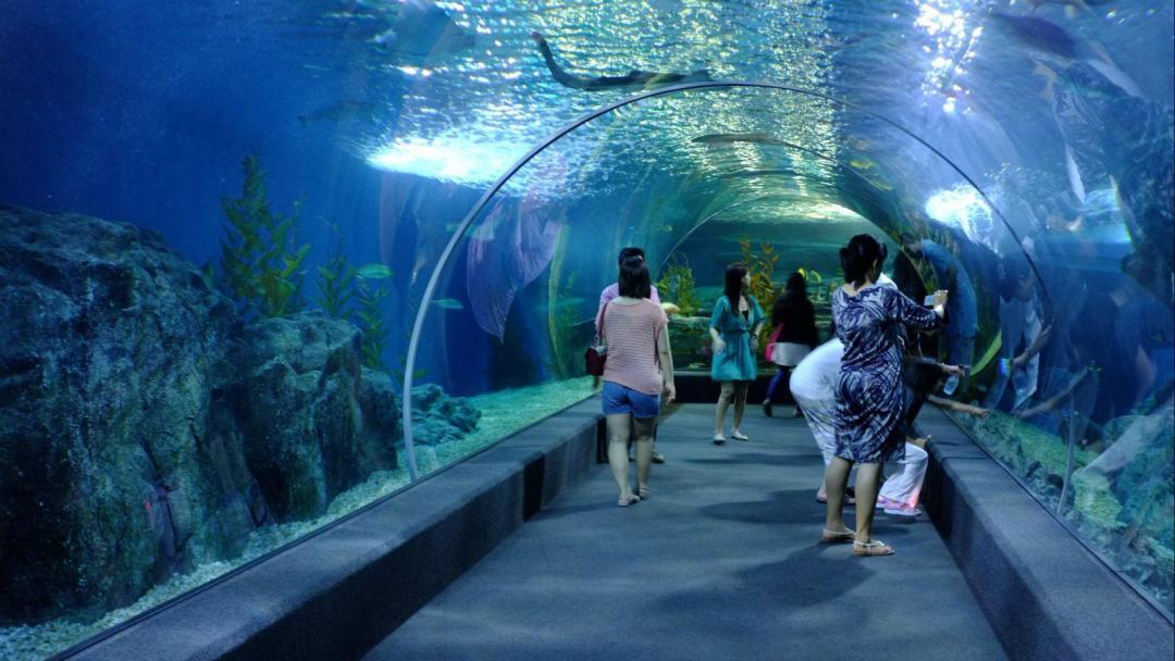 Sealife – đại dương trong lòng Bangkok