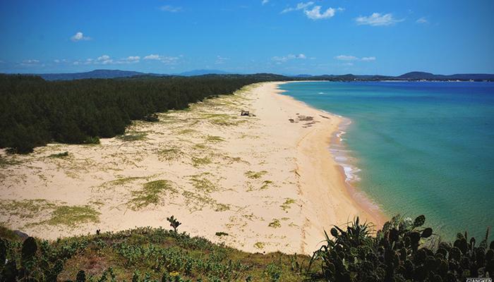 Bãi biển chọn cách ly với thế giới qua rặn phi lao xanh rì rào.