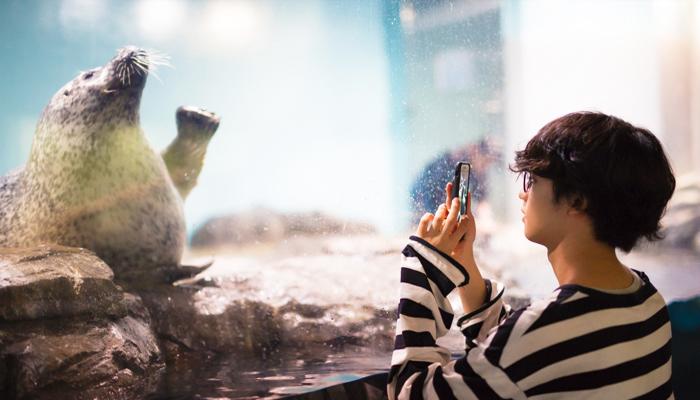 Yên tâm là những chú hải cẩu, chim cánh cụt hay sư tử biển ở Wild Street không hề sợ người mà còn rất thích được chụp ảnh đấy.