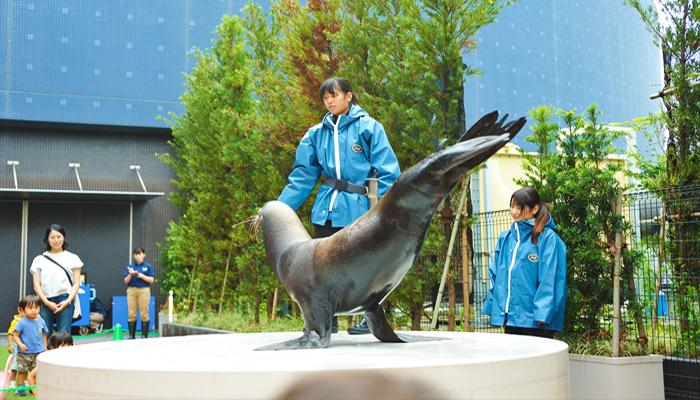 Bạn sẽ được tận mắt ngắm nhìn những chú hải cẩu và chim cánh cụt diễn xiếc ở cự li cực gần.