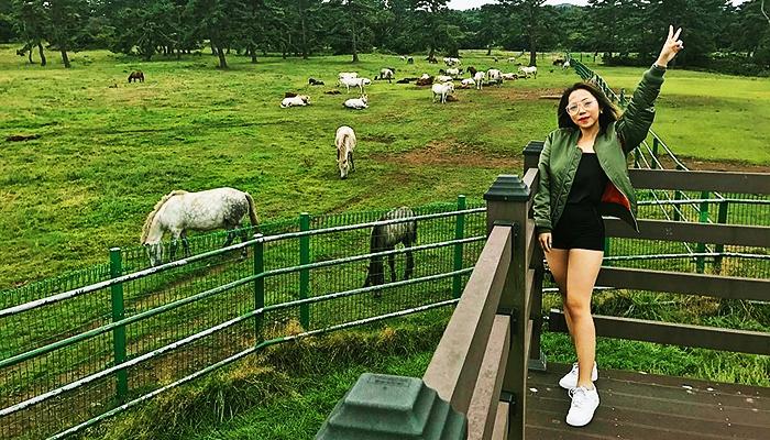 Cánh đồng nuôi ngựa rộng thênh thang của Jeju.