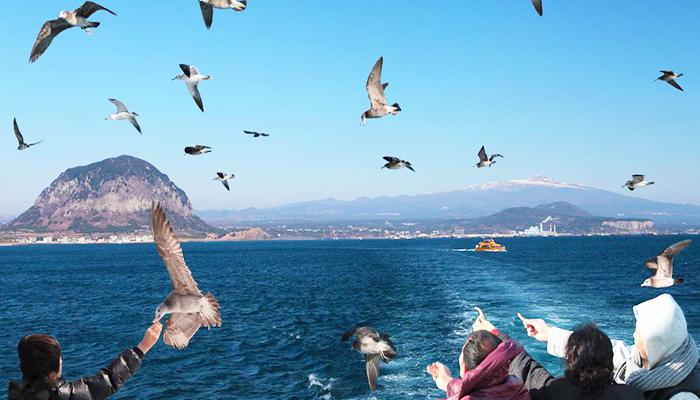 Hãy thử cảm giác vui đùa cùng đàn hải âu và hòa mình vào thiên nhiên nhé!