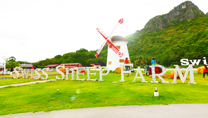 Nông trại cừu Thuỵ Sĩ chính hiệu đã xuât hiện ở Pattaya.
