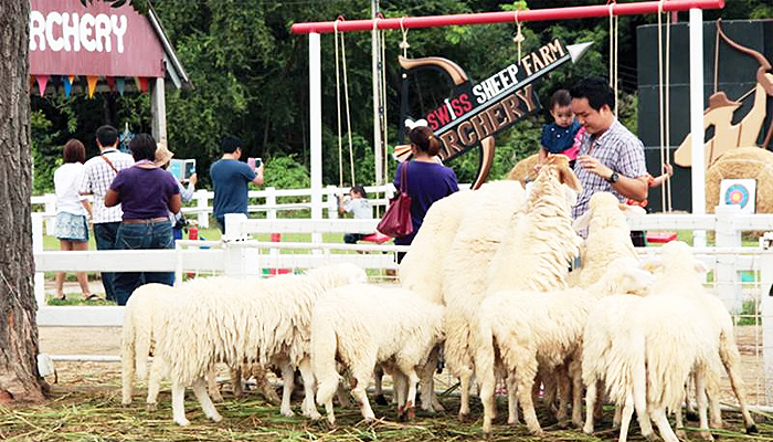 Hoạt động cho cừu ăn luôn được các bạn nhỏ và cả người lớn hứng thú.