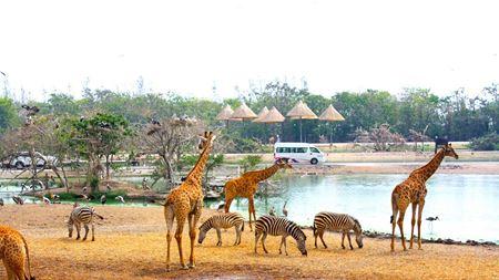 Hình đại điện của danh mục Safari World Bangkok