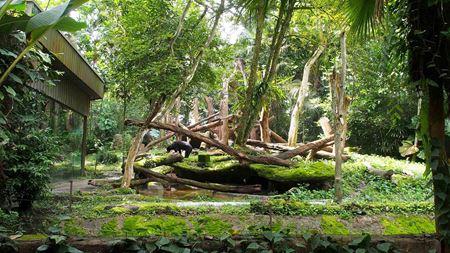 Hình đại điện của danh mục Sở thú Singapore - Singapore Zoo
