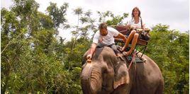 Hình của Vé Pattaya Elephant Village