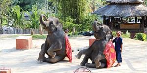 Hình của Tour thám hiểm rừng xanh Phuket nửa ngày (cưỡi voi + cưỡi xe kéo)