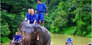 Hình của Tour huấn luyện và chăm sóc voi tại Chiang Mai (1 ngày)