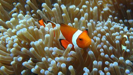 Hình đại điện của danh mục Underwater World Langkawi