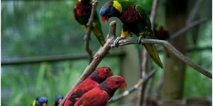 Hình của Tour Bird Park, Butterfly Park và Orchid Garden Langkawi - tham quan vườn chim, vườn bướm và vườn lan Langkawi