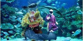 Hình của Vé Aquaria KLCC