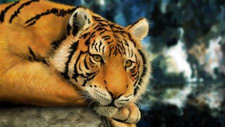 Hình đại điện của danh mục Samui Aquarium and Tiger Zoo