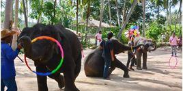 Hình của Tour khám phá Jungle Safari (cả ngày)