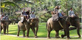 Hình của Vé Elephant Safari Park