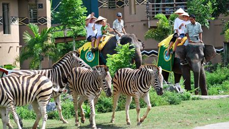 Hình đại điện của danh mục Bali safari & marine park