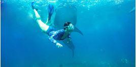 Hình của Tour du ngoạn và vui chơi cùng cá mập voi Cebu