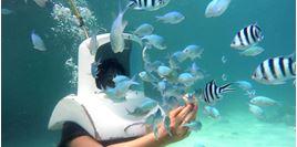 Hình của Khám phá thế giới đại dương: lặn biển và đi thuyền chuối vượt biển Boracay