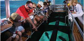 Hình của Tour đi thuyền đáy kính khám phá biển Boracay