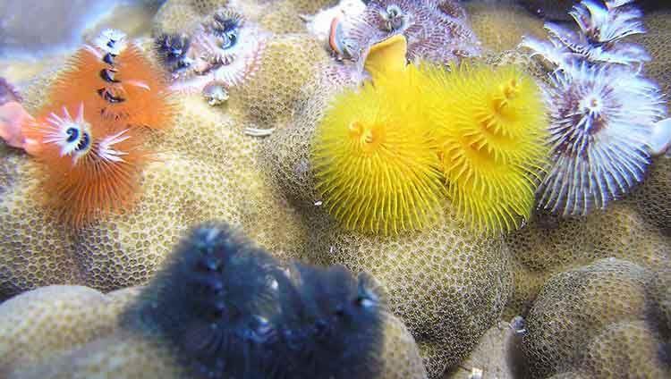 Tour Lặn Mũ Đi Dạo Dưới Biển