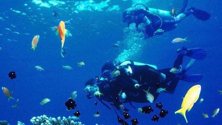 Khóa Học Lặn Biển Căn Bản Tại Nha Trang