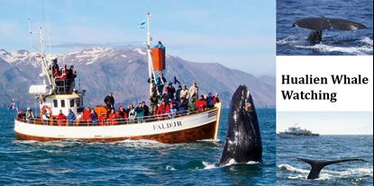 Hình của Ngắm cá voi Hualien (Hoa Liên)