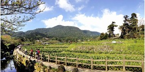 Hình của Tour Yangmingshan national park và suối nước nóng buổi chiều